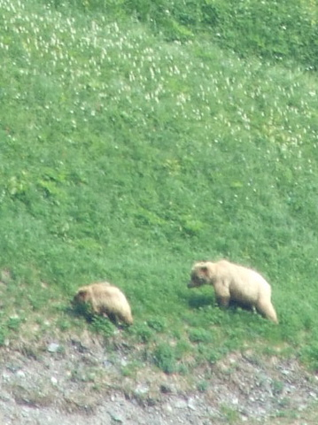 grizzly sow and cub 359x480