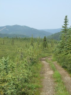 stampede trail 240x320