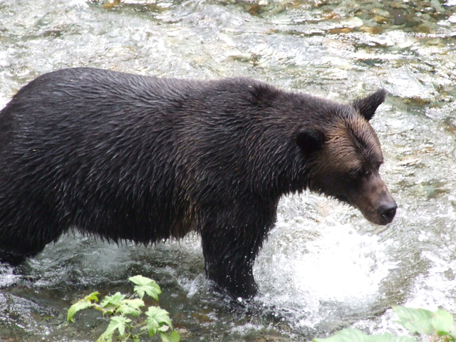 bear watching 640x480