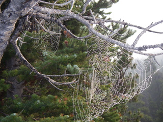 Spdier web in the early morning