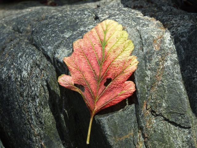 leaf 640x480