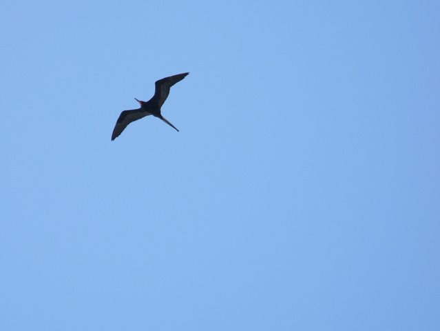 pterodactyl bird 639x480