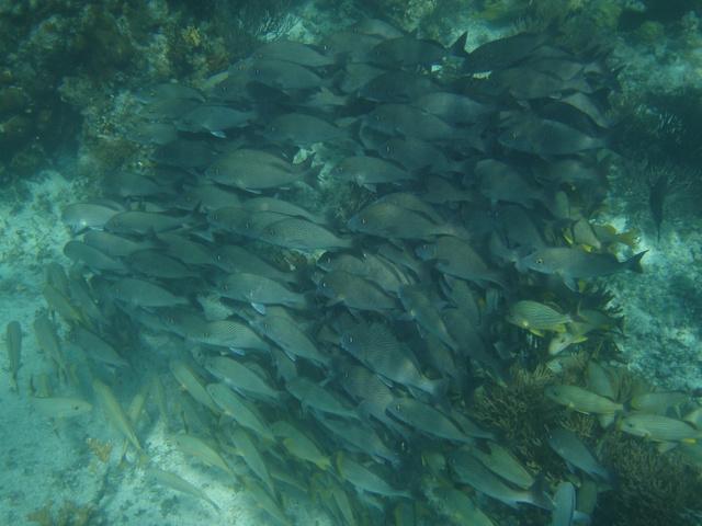 fish 640x480