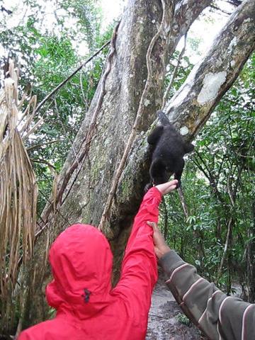 kate monkey 360x480