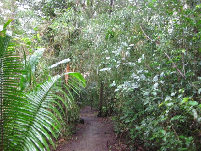 lush jungle 640x480