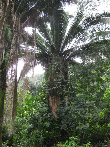 palm 360x480