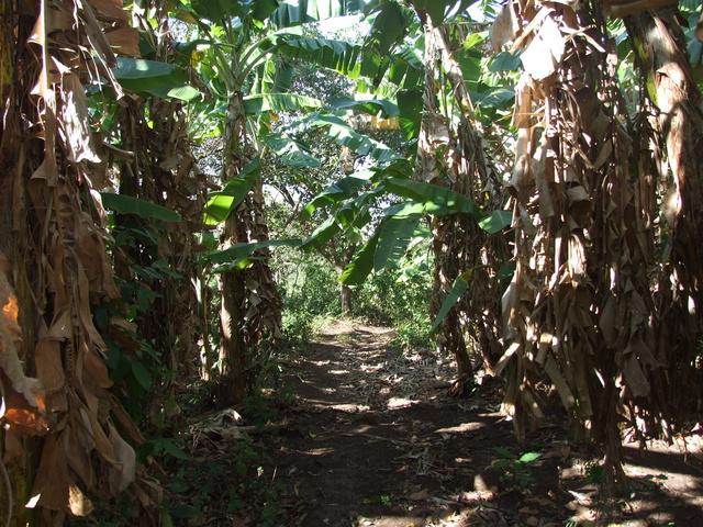 hiking bananna trees 640x480