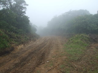 The hiking road to the cloudforest
