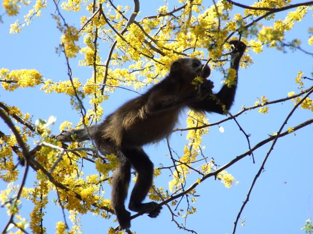 monkey climbing 640x480