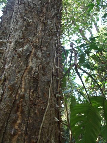 spikey tree 360x480