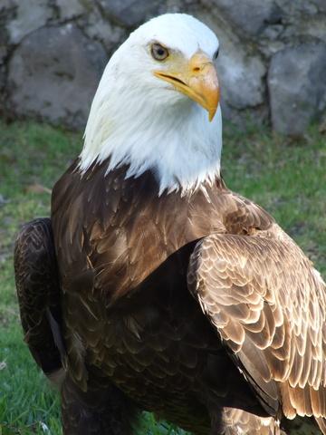 american eagle 360x480