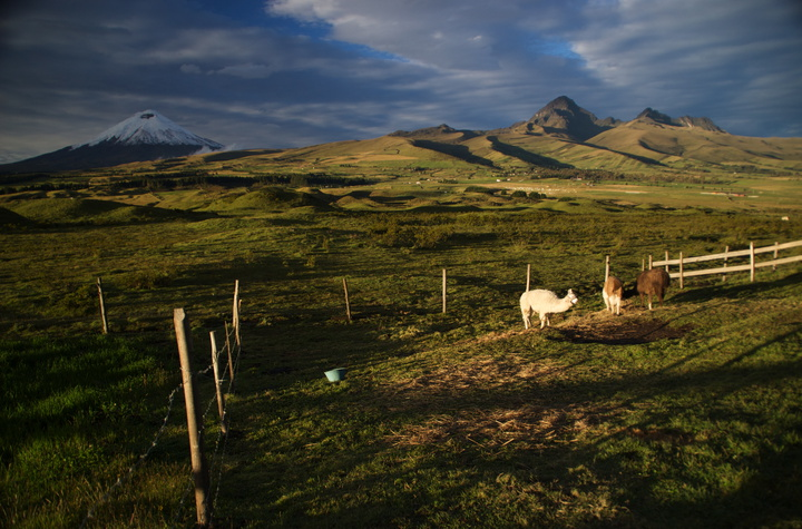 cotopaxi and llamas secret garden cotopaxi 720x475