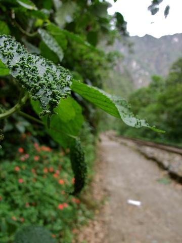 train tracks 360x480