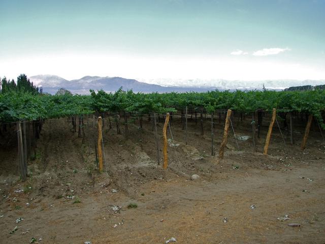 grapes argentina 640x480