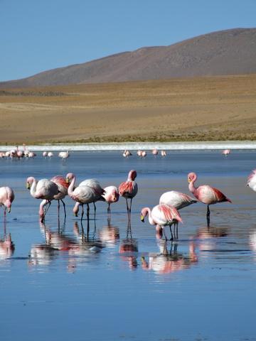 pink flamingos 360x480