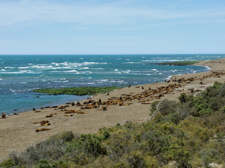Beach covered in sea lions