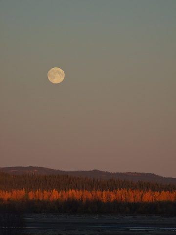 yukon fall moon 360x480