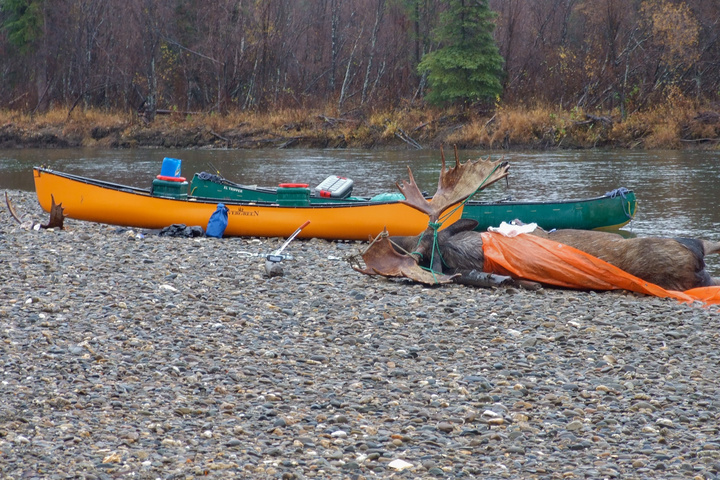 moose canoes 720x480