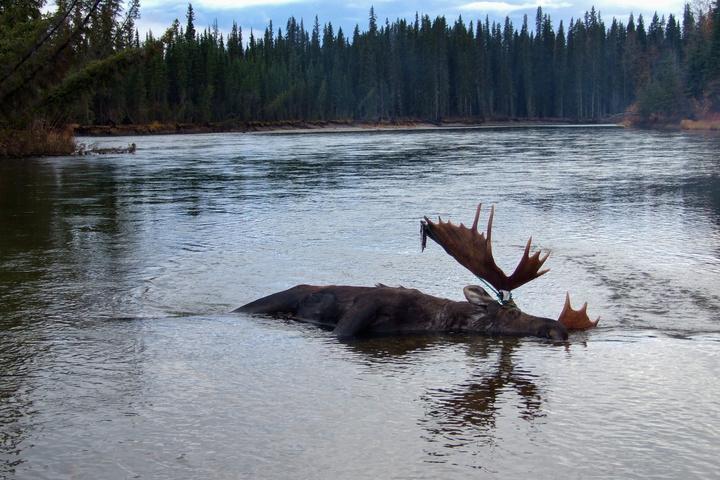 moose river 720x480