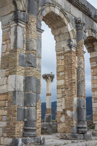 volubilis tower with stalk 320x480