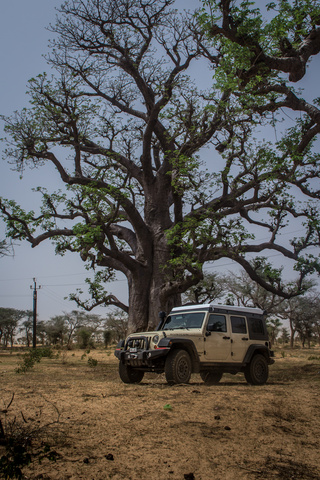 jeep boaba tree 320x480