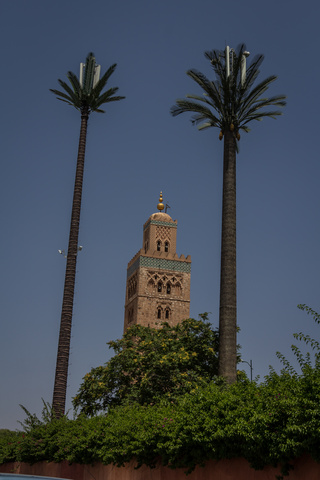 marrakech palm trees 320x480
