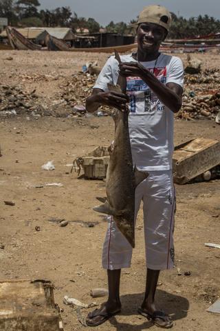 mbour fish market shark 320x480