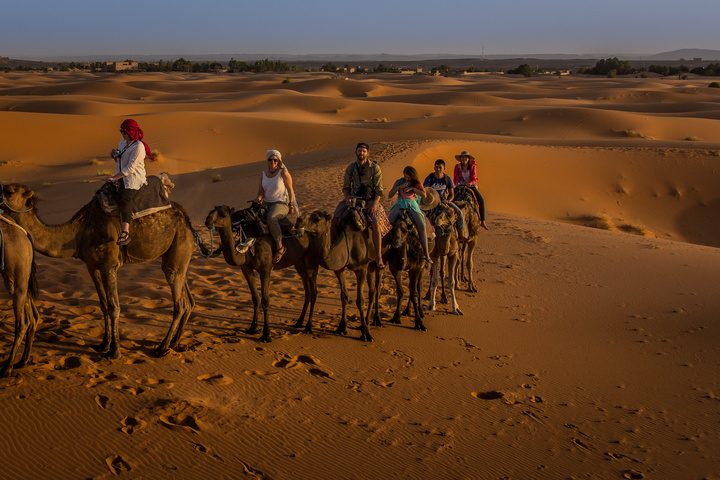 sahara camel team 720x480