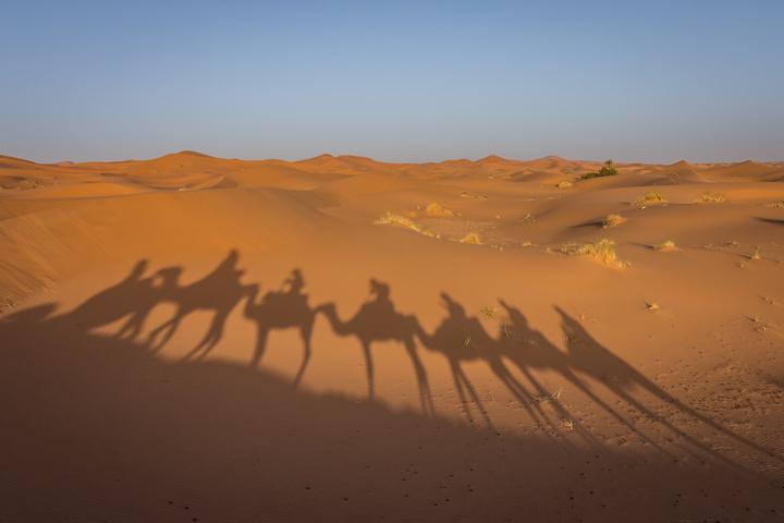 sahara desert camel shadows 720x480