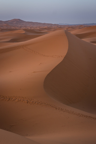 sahara endless dunes 320x480