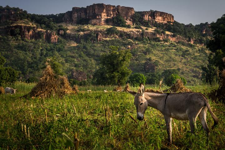 mali sunrise donkey1 720x480