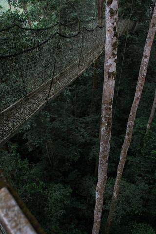 nigeria drill rannch canopy walk bridge 320x480