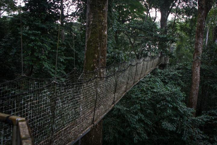 nigeria drill rannch canopy walk canopy bridge 720x480