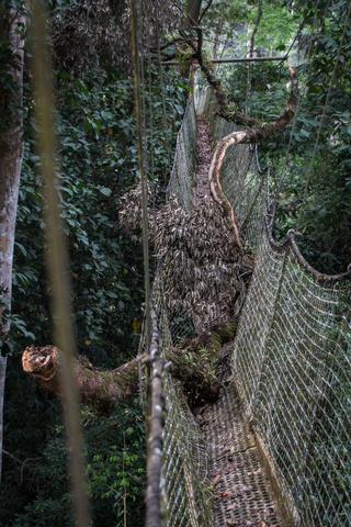 nigeria drill rannch canopy walk fallen tree 320x480