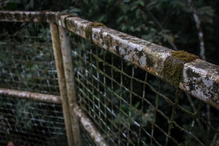 nigeria drill rannch canopy walk moss 720x480