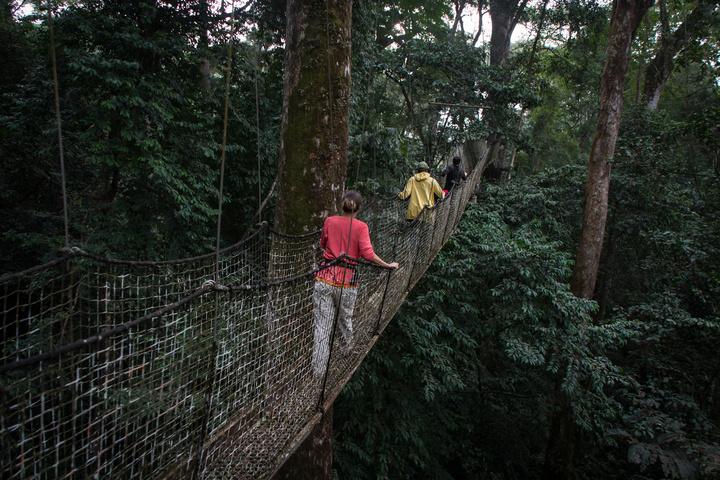 nigeria drill rannch canopy walk moving along 720x480