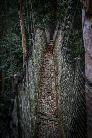 nigeria drill rannch canopy walk tunnel vision 320x480