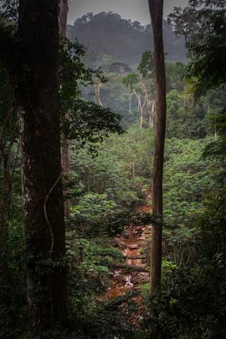 nigeria drill rannch canopy walk views 320x480