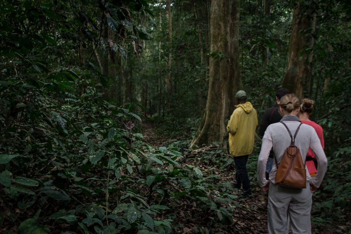nigeria drill rannch forest 720x480