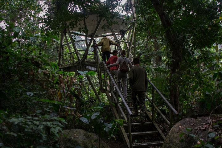 nigeria drill rannch onto canopy walk 720x480