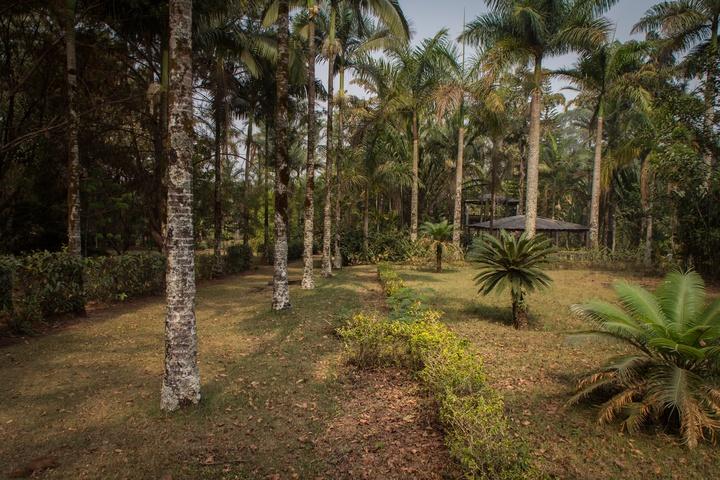 cameroon botanic gardens 720x480