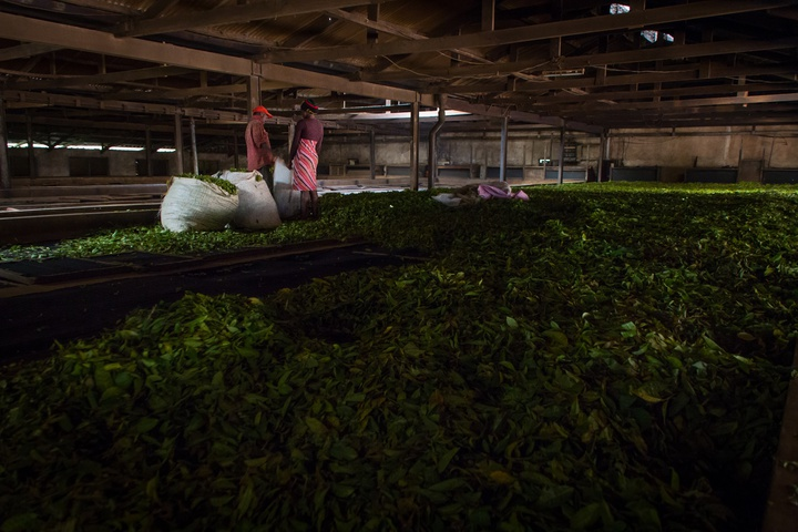 tea drying warehouse 720x480