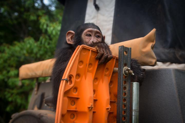 africa jeep chimpanzee maxtrax 720x480