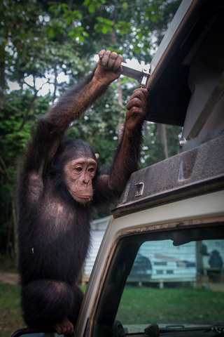 africa jeep chimpanzee ursa minor 320x480