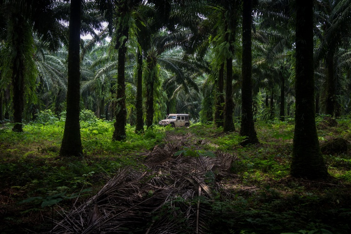 africa jeep palm plantation 2 720x480