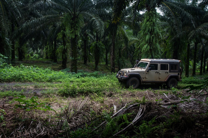 africa jeep palm plantation 3 720x480