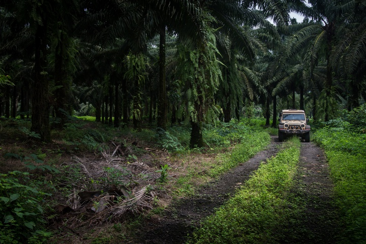 africa jeep palm plantation 720x480