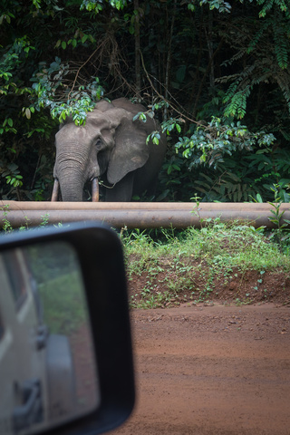africa jeep forest elephant 320x480