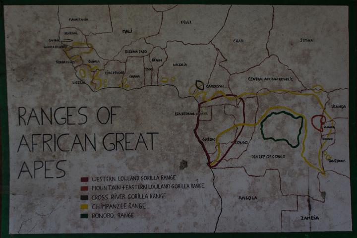 african ape range 720x480