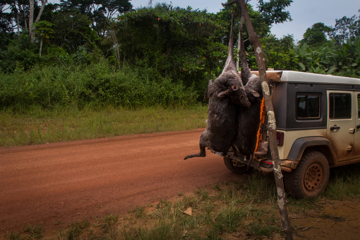 gabon bush meat jeep 720x480